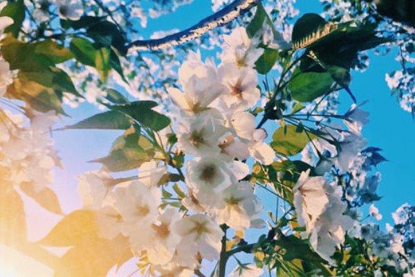 Spiritual Springtime