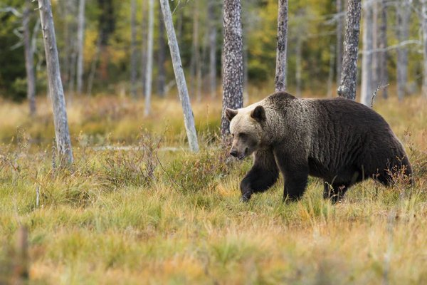 Story of the Three Bears